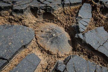 Surprising surface detail (Photo: Tom Pfeiffer)