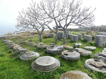 Fig trees and pilar remnants at the archaeological site of Ancient Thera. (Photo: Ingrid Smet)