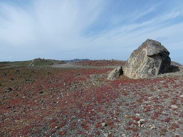 The usually grey-brown volcanic desert landscape of Nea Kameni has a vivid green and ruby red carpet in winter time. (Photo: Ingrid Smet)