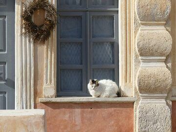 Oie cat watching over its home. (Photo: Ingrid Smet)