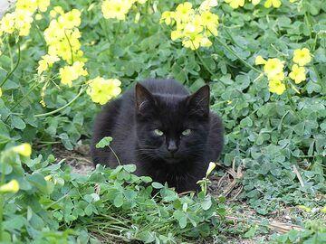 Garden kitten in Oia. (Photo: Ingrid Smet)