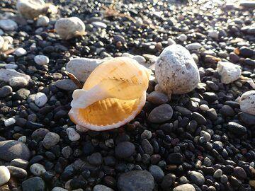 Shells and volcanic pebbles at Perissa beach (Photo: Ingrid Smet)