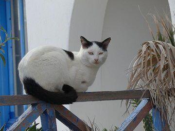 Sea side cat (Photo: Ingrid Smet)