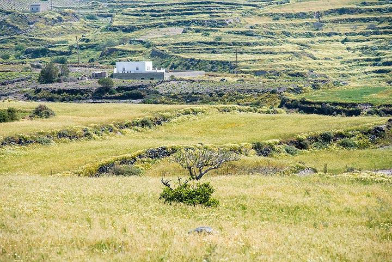 Fava and barley fields near the lighthouse of Santorini (Photo: Tom Pfeiffer)