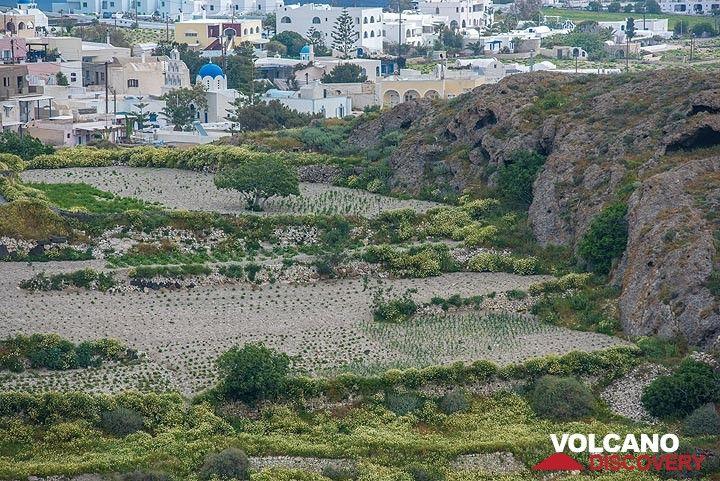 Fields beneath the village of Akrotiri (Photo: Tom Pfeiffer)