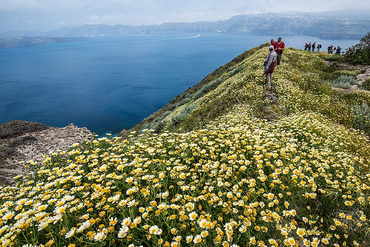 Large fields of daisies greet us with the view to the caldera, while the sun is slowly coming out. (Photo: Tom Pfeiffer)