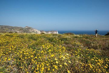 On our way to a deserved beach break, we pass again seas of flowers. (Photo: Tom Pfeiffer)