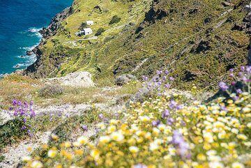 Flowers and the Plaka bay (1) (Photo: Tom Pfeiffer)