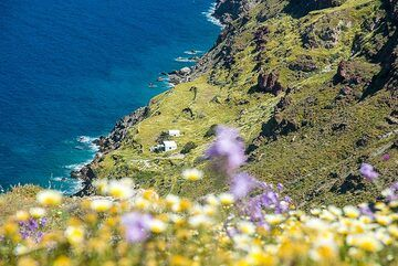 Flowers and the Plaka bay (2) (Photo: Tom Pfeiffer)