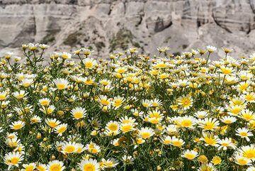 Daisies and ... (Photo: Tom Pfeiffer)