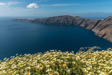 View of the northern caldera basin with a meadow of daisies in front. (Photo: Tom Pfeiffer)
