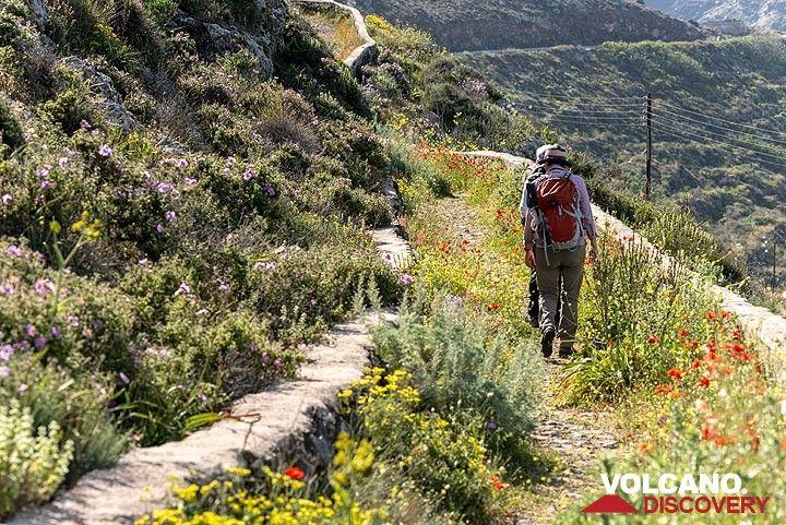The old mule path along the NE flank of Micro Profitis Ilias (Photo: Tom Pfeiffer)
