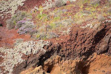 Colorful rocks and plants (Photo: Tom Pfeiffer)