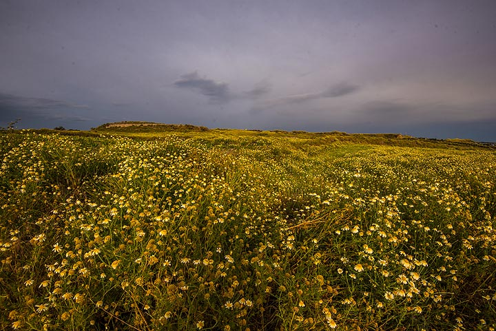 Passing abandoned fields, where the daisies already have started to dry out. (Photo: Tom Pfeiffer)