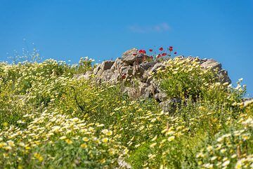 The fields along the path are filled with flowers. (Photo: Tom Pfeiffer)