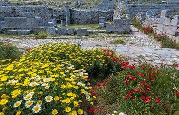 Between the still very impressive ruins, flowers have taken over all space where there is soil. (Photo: Tom Pfeiffer)