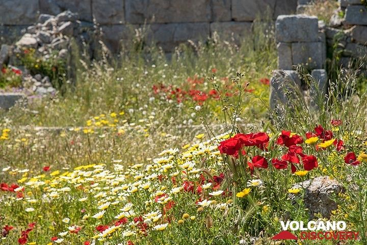 Meadow between the ancient ruins (Photo: Tom Pfeiffer)