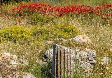 Ancient column (Photo: Tom Pfeiffer)