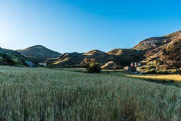 Barley field in the evening sunlight. (Photo: Tom Pfeiffer)