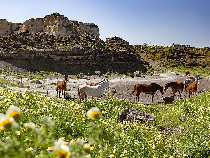 Horses relax in the former quarry of Mavromatis. (Photo: Tobias Schorr)