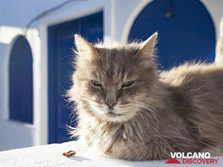 Cat in Ia village. (Photo: Tobias Schorr)