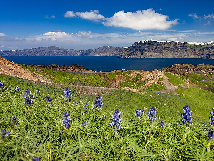 Lupine flowers in front of one of the Daphne craters on Nea Kameni island. Santorini caldera, March 2019. (Photo: Tobias Schorr)