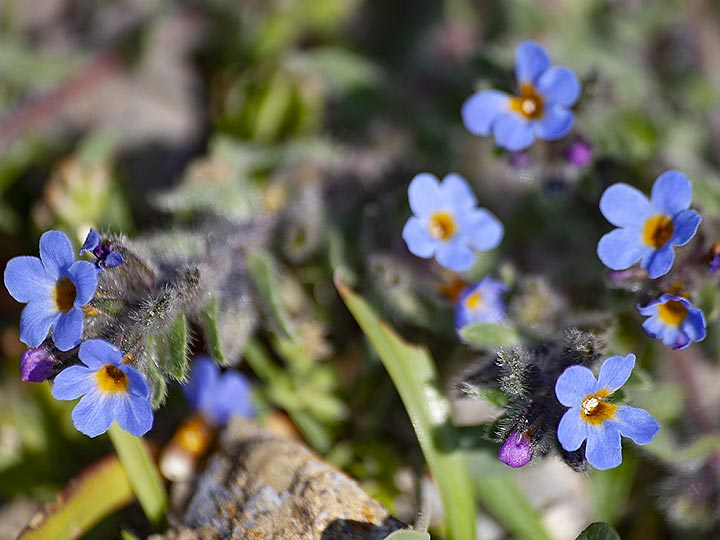Nice blue flowers at ancient Thira. (Photo: Tobias Schorr)