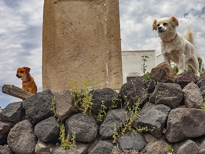 Dogs welcoming the hikers. (Photo: Tobias Schorr)