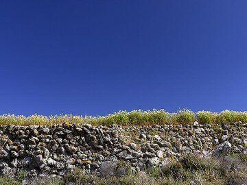 A dry wall with wheat at Akrotiri. (Photo: Tobias Schorr)