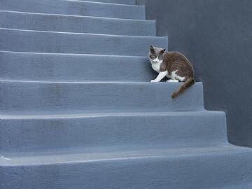 A grey cat on grey stairs. (Photo: Tobias Schorr)