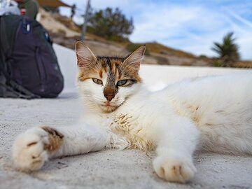 Our cat in Akrotiri hotel. (Photo: Tobias Schorr)