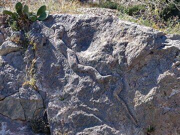 """The ancient snake at Exomytis """"Echidnea"""". (Photo: Tobias Schorr)"""