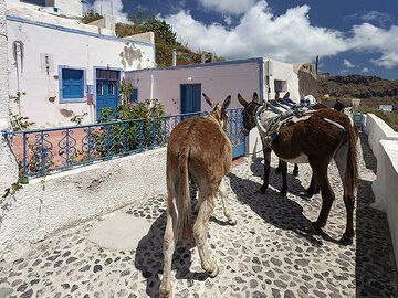 Donkeys are mainly used for transportation in the narrow lanes of Manolas village. (Photo: Tobias Schorr)