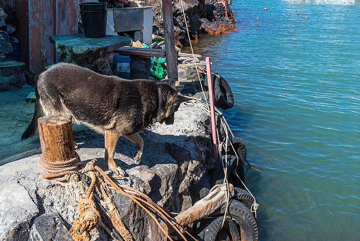 Plato, Sostis' dog, won't let anyone unauthorized disturb the home. (Photo: Tom Pfeiffer)
