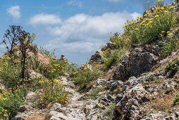 The trail leading towards Mesa Vouno. (Photo: Tom Pfeiffer)