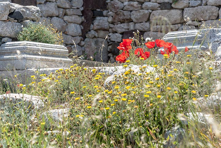 Red poppies inside the archeological site of Ancient Thera. (Photo: Tom Pfeiffer)