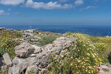 Daisies growing everywhere between the ruins. (Photo: Tom Pfeiffer)