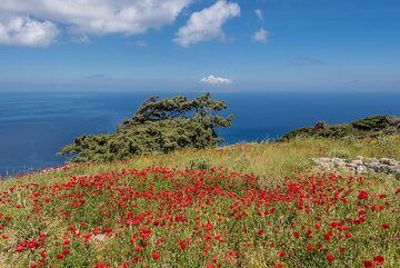 Field of red poppies and the sea (Photo: Tom Pfeiffer)