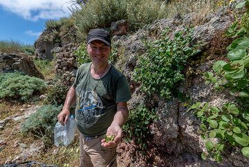 Our tour guide and photographer Tobias Schorr collecting capers. (Photo: Tom Pfeiffer)