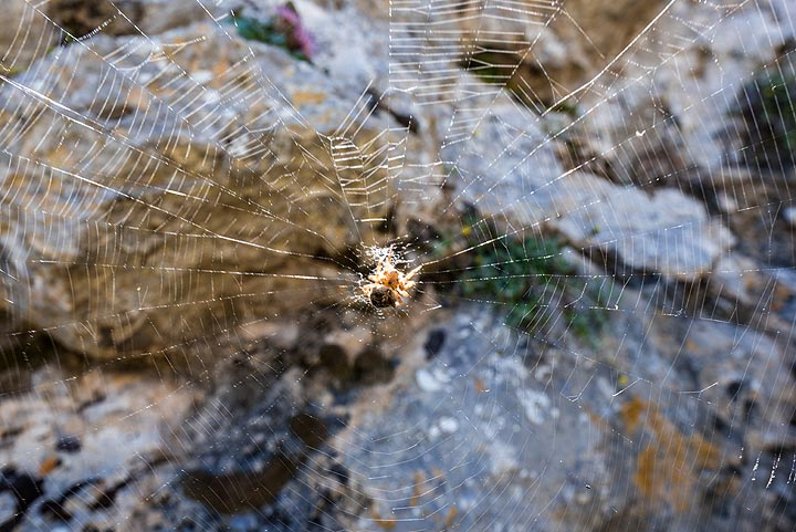 """Many """"inhabited"""" spider webs come in the way (Photo: Tom Pfeiffer)"""