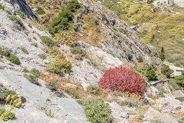 Red bush (Photo: Tom Pfeiffer)