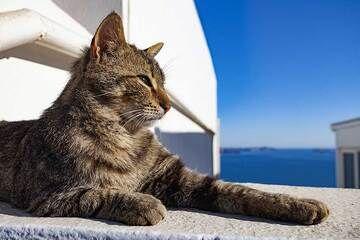 A proud cat in Oia village. (Photo: Tobias Schorr)