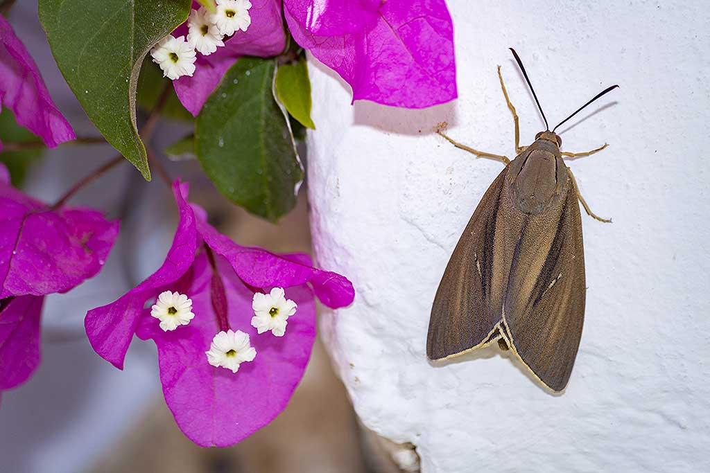A rare butterfly at our hotel at Akrotiri coast. (Photo: Tobias Schorr)