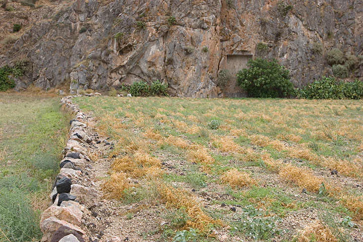 Fava fields at Echendra; Ancient tombs niches in the limestone cliff. (Photo: Tom Pfeiffer)
