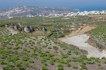 Vineyards and pumice canyons near Pirgos (Photo: Tom Pfeiffer)