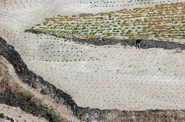 Terraced fields and dry stone walls in the loose pumice ash soil of Santorini (Photo: Tom Pfeiffer)
