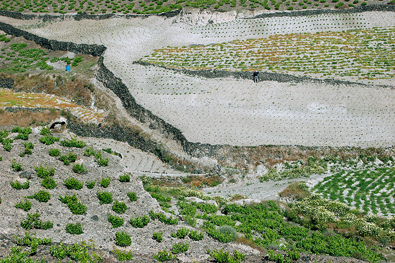 Terraced fields on Santorini (Photo: Tom Pfeiffer)