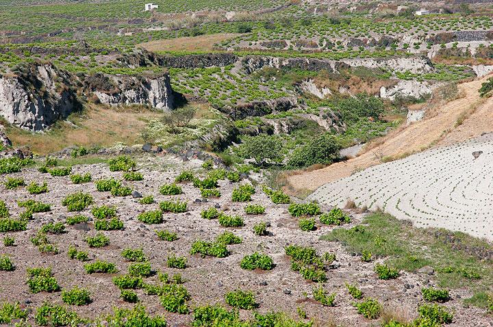 Terraced vineyard fields between Megolochori and Pirgos (Photo: Tom Pfeiffer)