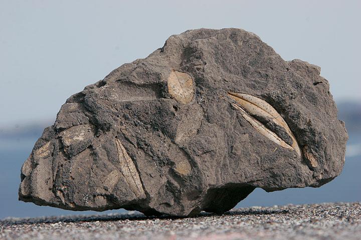 40.000 años oliva hojas conservadas en ceniza volcánica (Photo: Tom Pfeiffer)
