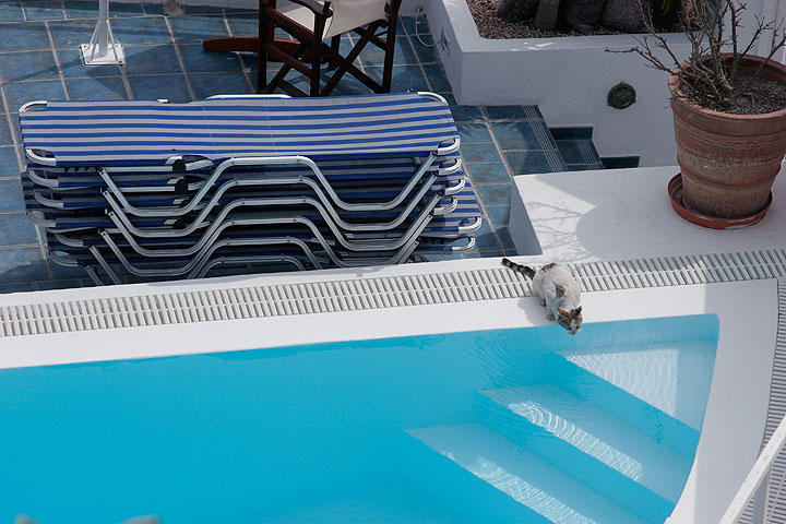 Cat drinking from the pool (Photo: Tom Pfeiffer)